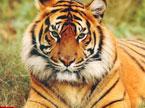 面孔20120209期:探访老虎袭人动物园